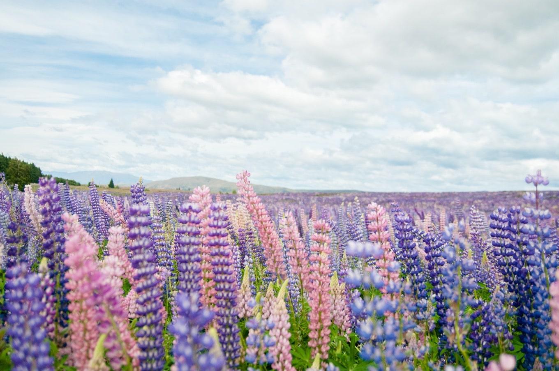 次回の復興トラベルはニュージーランド