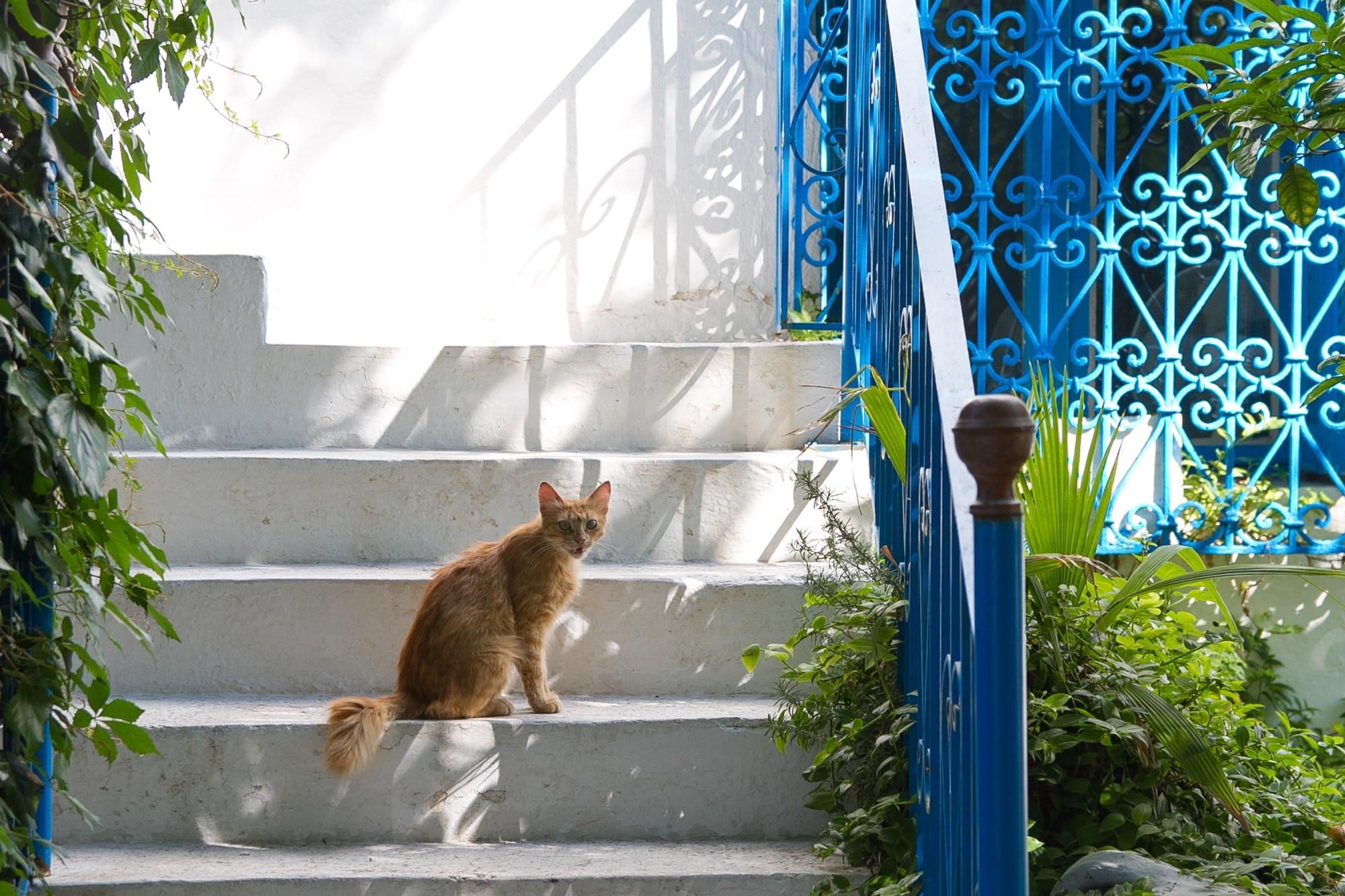 シディ・ブ・サイドの猫