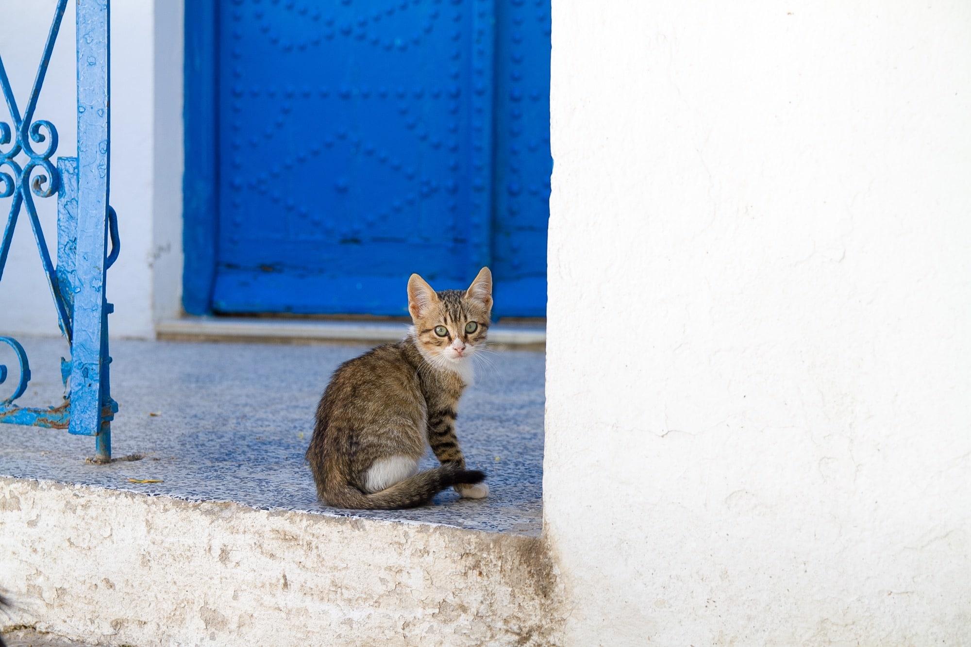 シディ・ブ・サイドと猫