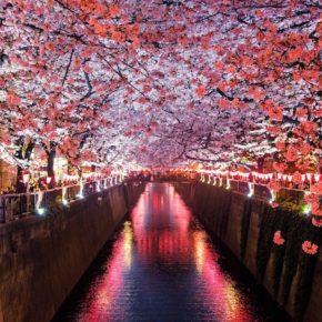 恵比寿に5年住んだから、お気に入りの海外料理店を紹介するよ