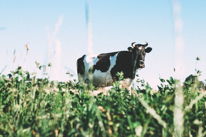 宮﨑 大輔さんの人生でやりたい100のリスト【農業を学ぶ大学生】