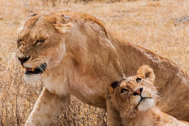 アフリカはここにある。タンザニアの「ンゴロンゴロ国立公園」