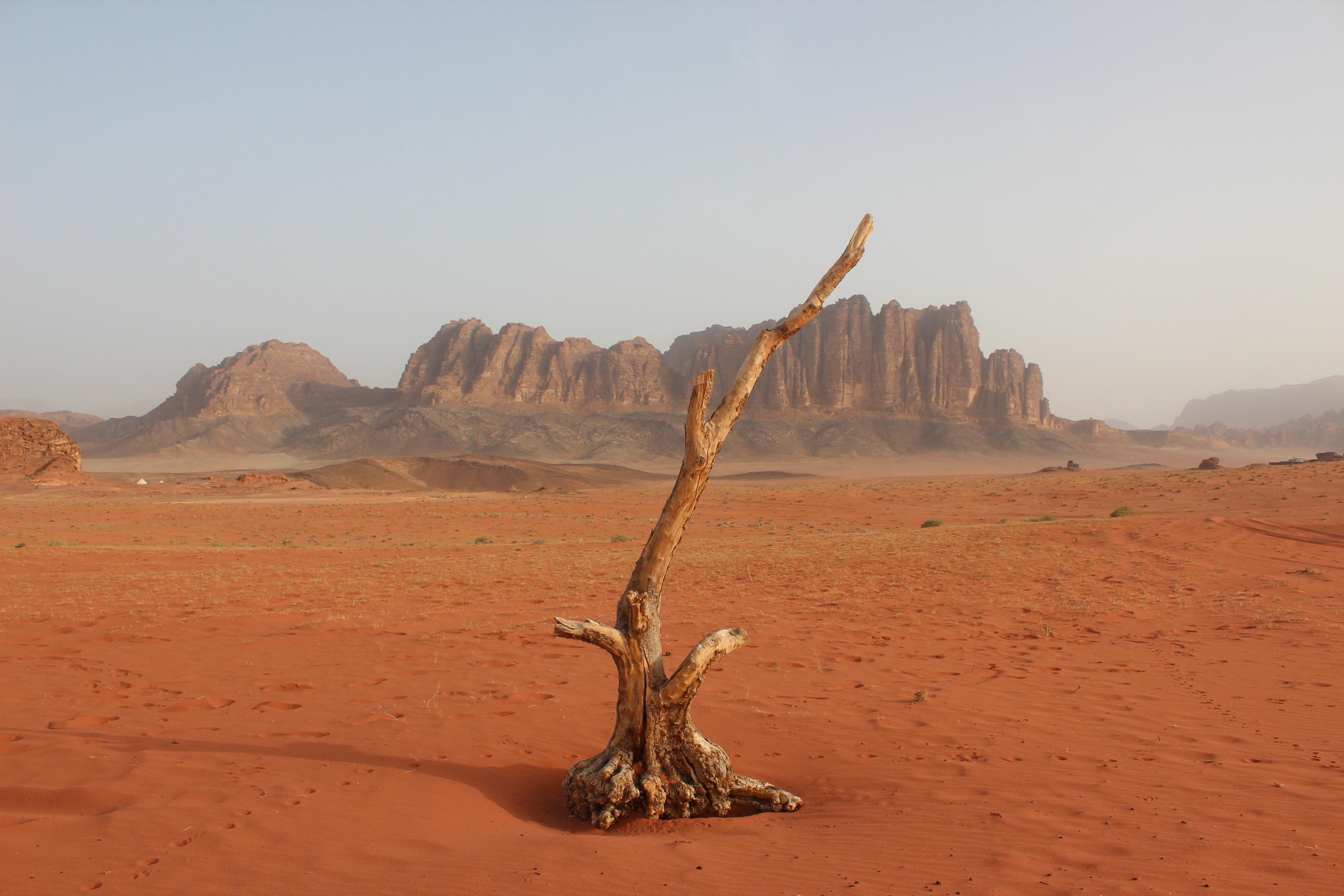 ワディ・ラムとペトラ(ヨルダン) / Wadi Rum&Petra(Jorden)