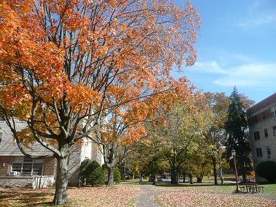 ニューヨークが秋になったので、ブログのレイアウトを変えてみた