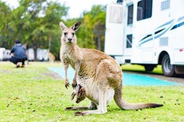 オーストラリアをキャンピングカーで楽しむ10の工夫【経験者が振り返る】